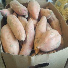 Bio édesburgonya - batáta - narancssárga húsú