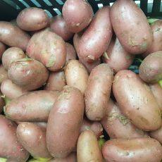 Bio krumpli - Piroskifli, sütni, főzni, salátának - 490 Ft/kg