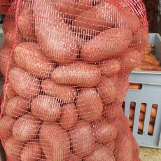 Bio krumpli - piros, mindenre jó - 490 Ft/kg