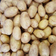 Bio krumpli - sárga, mindenre jó - 650 Ft/kg